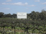 Jacobs Creek vineyard, South Australia