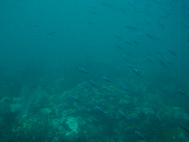 School of fish, submarine excursion
